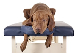 Myotherapy and dogs