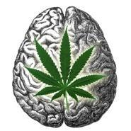 marijuana school online