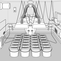 Grow Room Designs With Pictures And Diagram Lateral View Sheep Brain 10 Steps To Setup Your Marijuana Green Cultured
