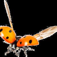 Pests-and-Predators