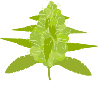 Flowering Cannabis