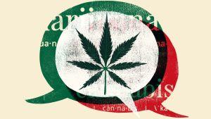 Hard-Won Cannabis Dispensary Leadership