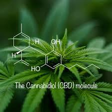 The cannabidiol Module