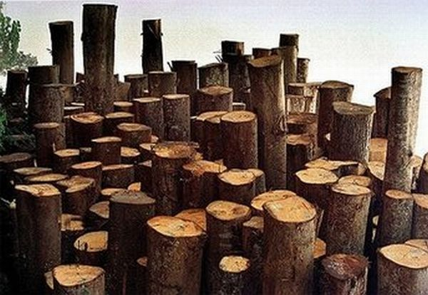 Austria produces gas from wood