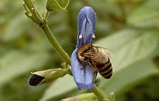 bees2 1822
