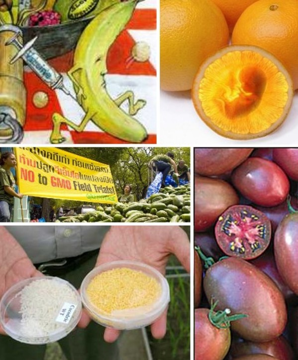 GM fruits and vegetables