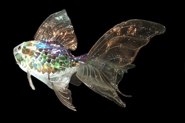 recycled art fish