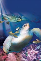 sea creatures 1822