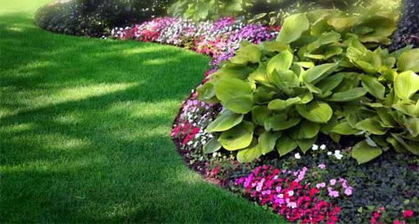 Landscaping tips  (2)