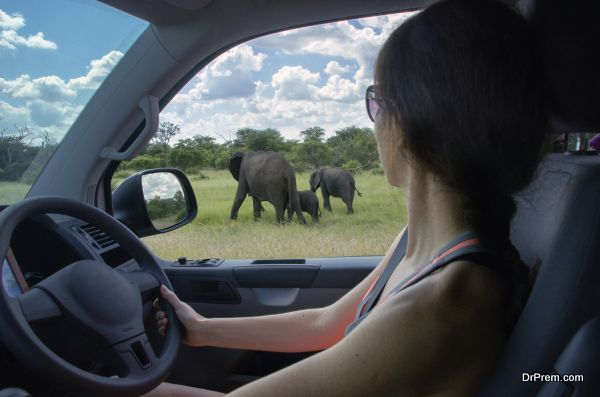 Woman on safari vacation in South Africa, looking at elephant