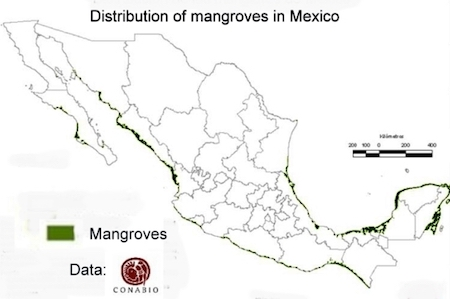 Why Saving Mexico's Mangroves Is Important