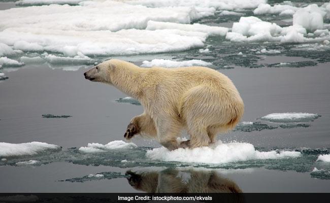 A warmer arctic (Credit istockphoto.com / ekvals)