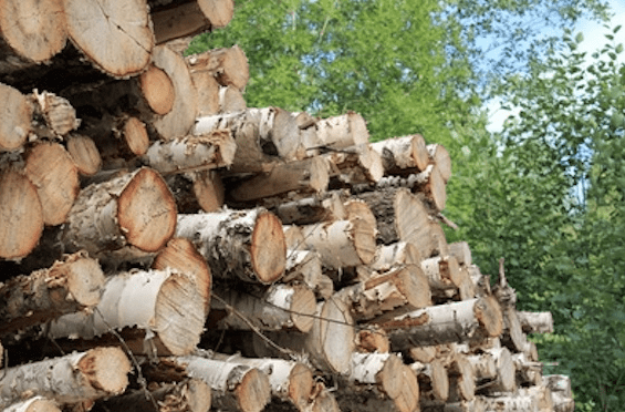 Dead trees for biomass power