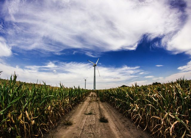 Wind turbine above a corn field (Image: Pixabay)