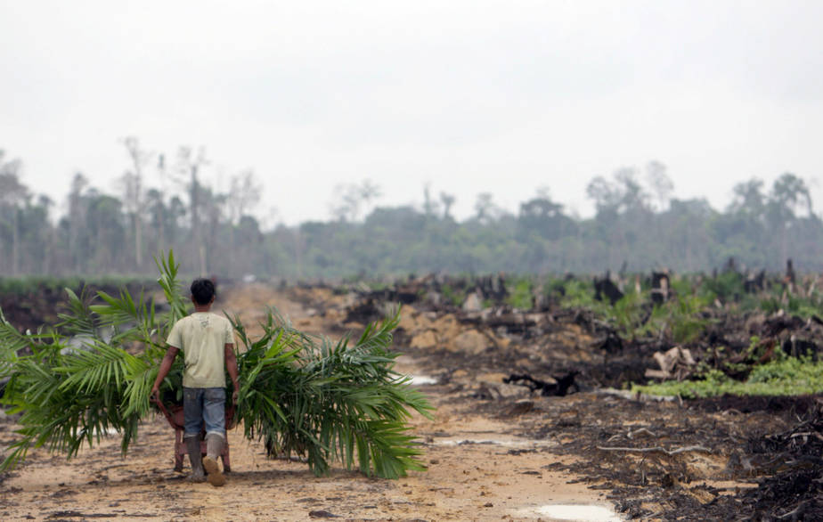 Cutting forests for palm oil plantations (Credit Dimas Ardian | Getty Images)