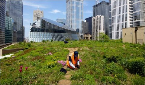 Lovely Eco Roof Garden in Chicago