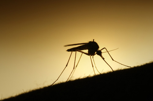 Penyebaran Virus Zika, Pemerintah Perlu Perketat Pengawasan ...