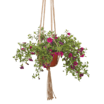 Rope Hanging Plant Holder Apartment Living