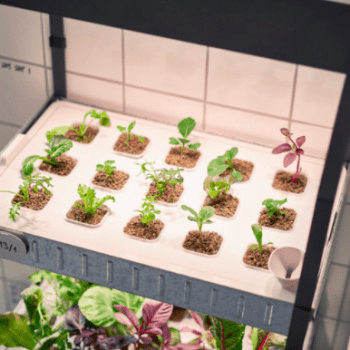 Ikea Hydroponic Grow Kit Apartment Living