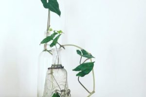 Grow Your Own Herbs in Recycled Jars and Bottles