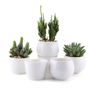 Ceramic White Succulent Planter Collection Gift Ideas [tag]