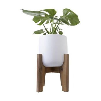 Mini Pot with Acacia Stand Apartment Living