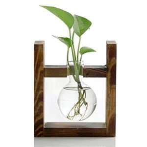 Ivolador Glass Bulb Vase with Wooden Stand Apartment Living [tag]