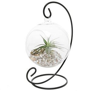 Glass Hanging Terrarium Apartment Living [tag]