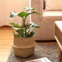 Jasons Brothers Foldable Seagrass Belly Basket With Handles For Storage Nursery Laundry Tote Beach Bag Plant Pots Cover Indoor Decorative 11 27x24cm 0