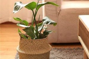 Where to Find Indoor Plant Pots and Stands in Australia