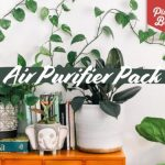 Air Purifier Indoor Plant Pack Apartment Living
