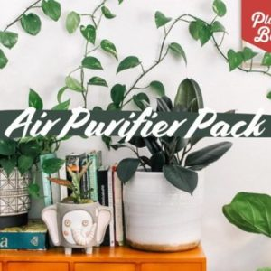 Air Purifier Indoor Plant Pack Apartment Living [tag]