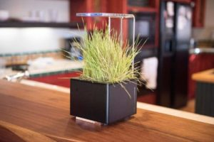 FogBox LED Planter Apartment Living [tag]