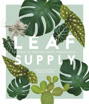Leaf Supply: A guide to keeping happy house plants Apartment Living