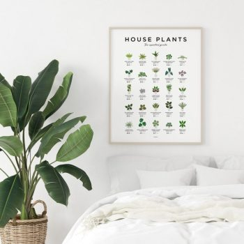 Indoor House Plant Wall Print Apartment Living