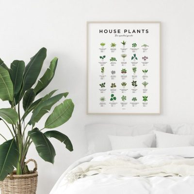 EcoQube Frame Sprouting Kit Apartment Living 12