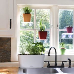 Aquaphoric Self Watering Planter Apartment Living [tag]