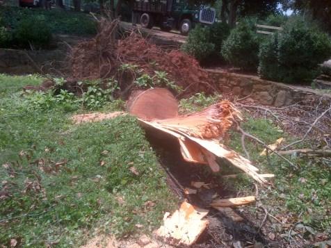 Storm Damage Cleanup (7)