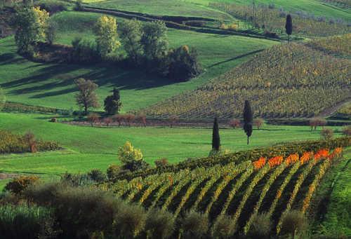 Paesaggio Agrario Di Rilevante Valore
