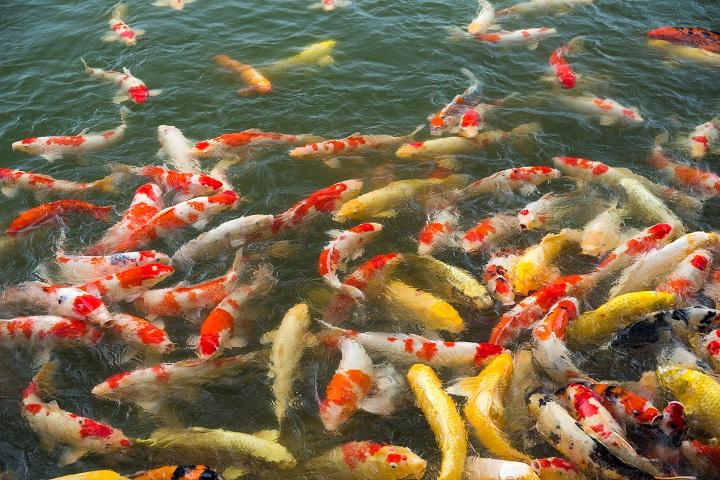 Symbolbild Fische © Bildagentur PantherMedia Leung Cho Pan