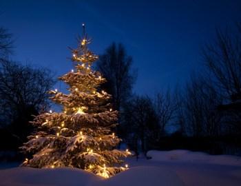 Der ökorrekte Weihnachtsbaum