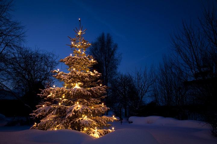 Symbolbild Der ökorrekte Weihnachtsbaum © Bildagentur PantherMedia Tobias Ott