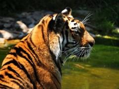 Über Wildtiere im Zirkus