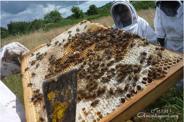 Bee farming project in West Cork