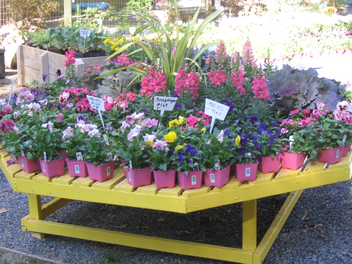 Why I Won't Be Buying My Plants at the Big Box Stores