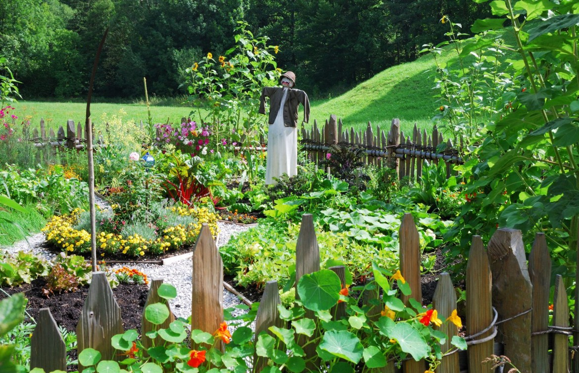 A vegetable garden with flowers and scarecrow