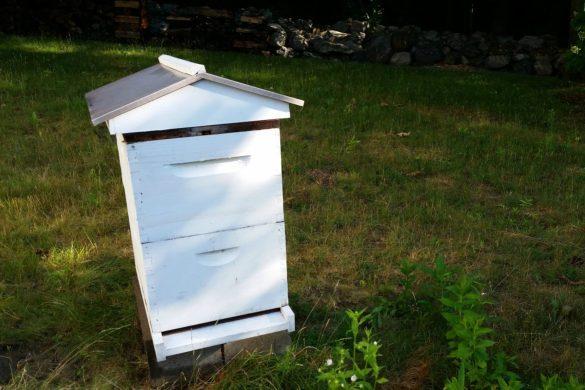 honey bees hive