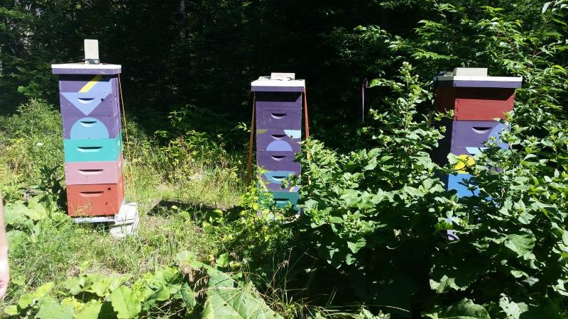 bee garden, beehives