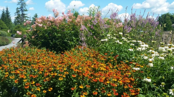pollinator-friendly flowers, organic gardening tips