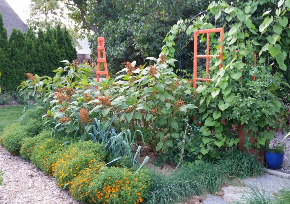 organic vegetable gardening at Tower Hill Botanical Gardens